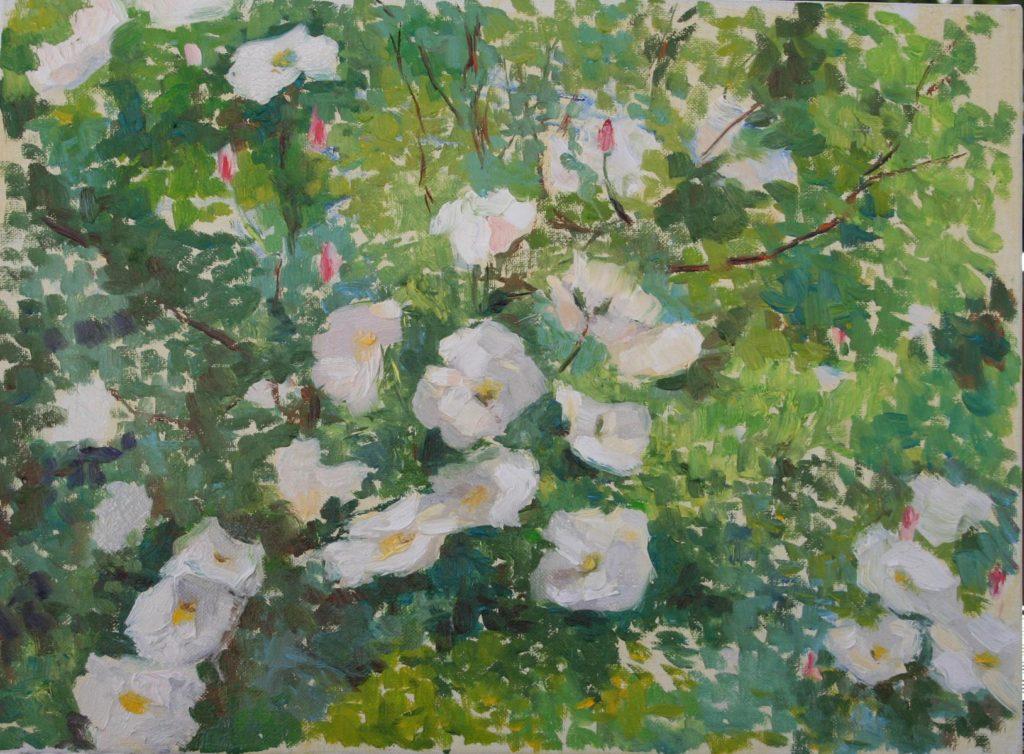Jasmine Roses. Brookside Gardens. oil on canvas