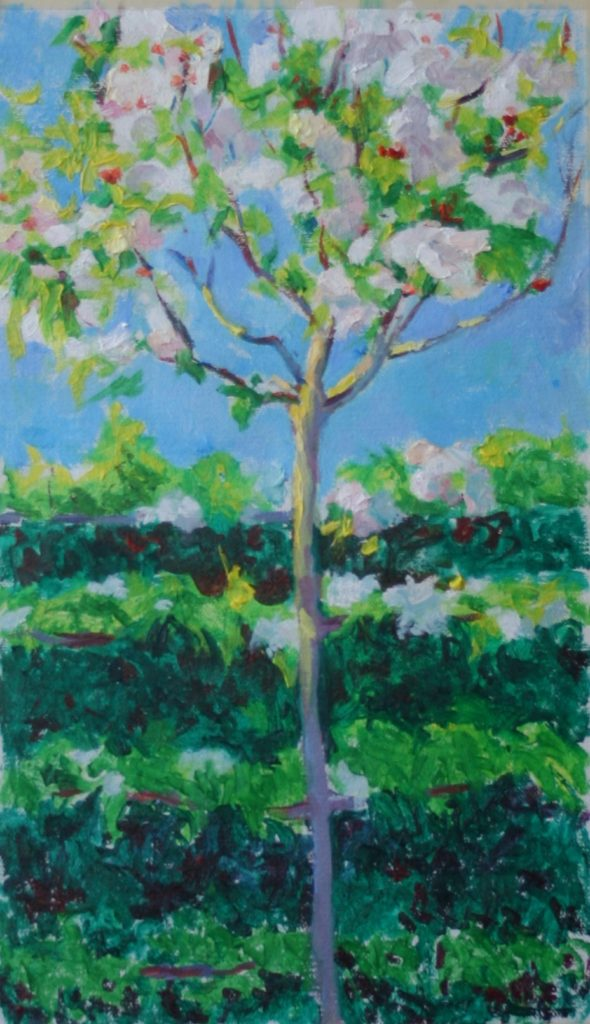 Apple Tree Blossoms. Brookside Gardens. oil on canvas